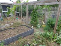 garden stripped bare